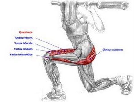 Lunges弓步-針對股四頭肌_002