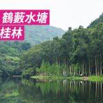 [香港山女] 流水響 鶴藪水塘 香港小桂林